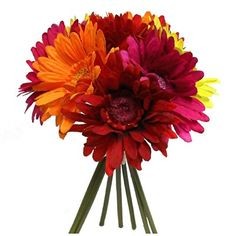 This gerbera daisy bouquet has 9 blooms. It measures about in diameter. Bouquet size: x Gorgeous and prime quality available on the market, Prom Flowers, Fall Wedding Flowers, Wedding Flower Arrangements, Bridal Flowers, Flower Centerpieces, Flower Bouquet Wedding, Wedding Centerpieces, Tall Centerpiece, Flower Bouquets