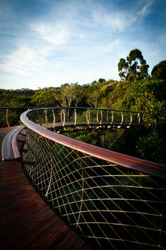 Kirstenbosch's tree canopy walkway VISI / Articles / Steely snake