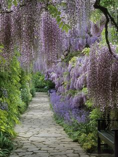 ** Garden path / purple garden