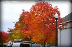 still more fall shots....
