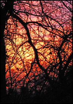 mother nature's stained glass by devilicious on DeviantArt