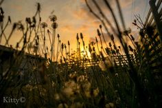 Weeds as pretty as a Sunset Photo by Katie Miller -- National Geographic Your Shot