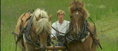 Täällä pohjantähden alla Horses, Tv, Animals, Animaux, Animales, Horse, Animal, Dieren, Television Set