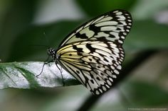Butterfly standing on leaf