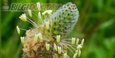 Dandelion, Flowers, Plants, Model, Instagram, Dandelions, Scale Model, Plant