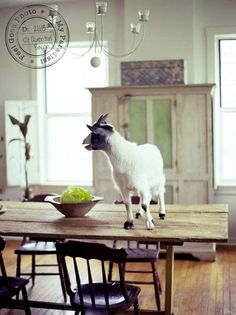 what's a dining room for if you can't have a goat on your table?