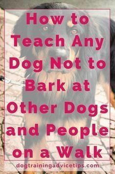 Dog Training Chewing How to Teach Any Dog Not to Bark at Other Dogs and People on a Walk. Training Chewing How to Teach Any Dog Not to Bark at Other Dogs and People on a Walk. Dog Commands Training, Dog Training Near Me, Basic Dog Training, Training Your Puppy, Training Dogs, Training Classes, Training Online, Training Exercises, Training Schedule