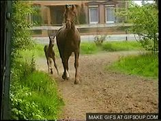 funny horse gif - Google Search