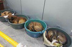 Posto de gasolina de Porto Alegre conquistou moradores da região e fregueses ao acolher os cães que precisavam de ajuda.