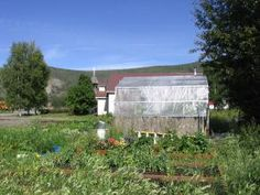 Community garden, Nenana