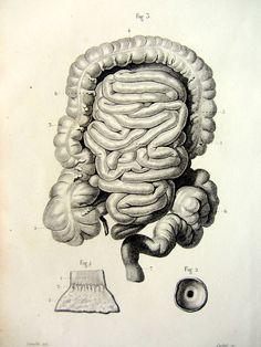 1846. Dessin de J.-B. Léveillé. Gravure : Corbié. [Color 1852: https://www.pinterest.com/pin/287386019948286887].