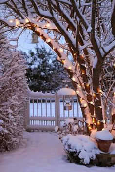 beautiful... snow covered twinkle lights over walkway