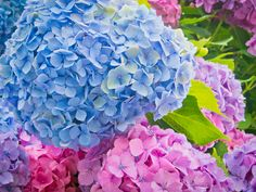 The Beauty of Flowers : Photo