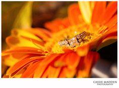 Cassie Madden Photography   Engagement Photography   Couple Photography   Wedding Photography   Fall Engagement Photos   Ring Shot   Wedding Details   Engagement Ring   Laramie, Wyoming