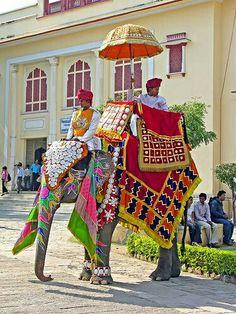 Colourful Elephant , Jaipur palace , India