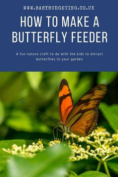 Nature Crafts Cheap and fun! A simple nature craft how to: How to make a butterfly feeder - simple and easy nature craft for kids to attract more wildlife to the garden. Nature crafts and play Diy Projects For Adults, Easy Crafts For Kids, Crafts To Do, Crafts Cheap, Craft Kids, Craft Work, Kid Crafts, Garden Crafts, Garden Projects