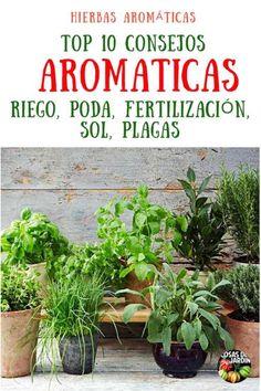 Organic Gardening Information Flower Pot Design, Beautiful Soup, Water Plants, Houseplants, Vegetable Garden, Planting Vegetables, Container Gardening, Gardening Books, Flower Pots