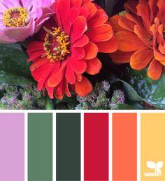 (1) Design Seeds