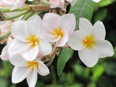 Tortola, Carribean, lovely flowers