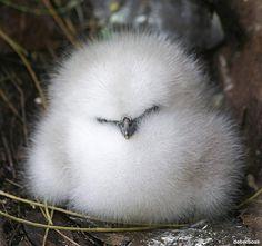 Fluffy bird♥