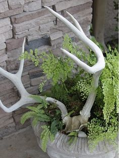 Antlers with ferns looks lovely