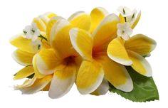 Hawaii Luau Party Dance Artificial Fabric Plumeria Flower Hair Clip Yellow White Edge