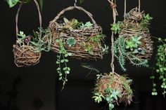 Handmade akebia bag,ball and birdcage for succulents display.