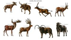 Giraffes, Deer, and Cattle. Row 1: Prolibytherium, Sivatherium, Ilingoceros, Hayoceros; Row 2: Megaloceros, Eucladoceros, Pelorovis, Bos Primigenius.