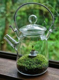 Glass tea pot terrarium: How clever this is! I will try to remember to find interesting clear glass containers to use for terrariums. Moss Garden, Garden Art, Garden Design, Terrariums, Diy Terrarium, Terrarium Centerpiece, Terrarium Wedding, Glass Terrarium, Air Plants