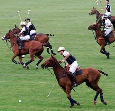 cigars will be happening after the match Polo Horse, Polo Team, Sport Of Kings, Good Cigars, Marco Polo, Ivy League, Happy Socks, Horse Breeds, Great Shots