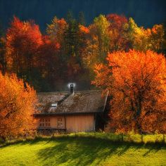 Autumn Colors!!! I so wish we were able to enjoy the same beauty here.