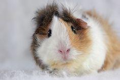The Pigster! by eltiodecharlotte, via Flickr