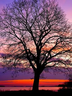 Oak Tree ... I love the look of trees that have leaves and I love the look of bare trees !  This is a beauty !