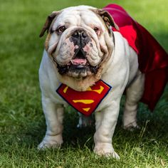 SuperBully to the rescue!