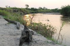 @ The River Ishasha, Uganda (Queen Elizabeth National Park)  To book a tour or safari to this lodge, contact  info@kombitours.com  +256 (0) 7929 33773 www.kombitours.com www.facebook.com/kombitours Twitter @Kombi Nation Tours
