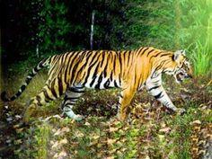 Periyar Tiger Reserve in Kerala awarded by NTCA