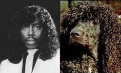 Everyone who meets my dog says his fro reminds them of Rick James.  This photo shows it perfectly.