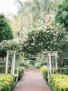 die besten 25 rosenstrauch ideen auf pinterest wachsende rosen rosenbusch pflege und. Black Bedroom Furniture Sets. Home Design Ideas