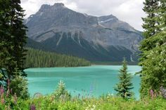 Le Canada, c'est l'appel du Grand Nord et des grands espaces. Ici, nous sommes à une centaine de kilomètres de l'Alaska, dans le sud du Yuko...