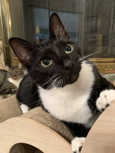 Cats and kittens info are offered on our site. Cute Cats And Kittens, I Love Cats, Crazy Cats, Cool Cats, Kittens Cutest, Cute Funny Animals, Cute Baby Animals, Animals And Pets, Funny Cats
