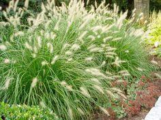 Au lieu de la pelouse traditionnelle, plus de jardiniers optent pour l'herbe décorative. Les 100 idées d'aménagement jardin avec des graminées ornementales