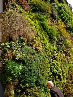 vertical garden by French botanist Patrick Blanc at Caixa Forum in Madrid, Spain. Photo by Zeya Schindler