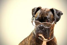 COOLEST. DOG. EVER. Why does he remind me of Simon Cowell?