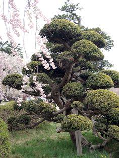 the real japan, japan, garden, park, japan, landscape, japanese, public, travel, tour, explore, flower, plant, tree, pond, lake, pool, bonsai, gardening, garden design, layout, planting http://www.therealjapan.com/subscribe/