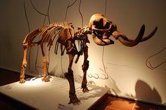 The Gap Year Blog - Science Club - Minielephants