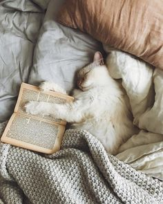 """My two favorite things in the world cats and books 😍🐈❤️ protect-and-love-animals: """" """" Crazy Cat Lady, Crazy Cats, Animals And Pets, Cute Animals, Photo Chat, Book Aesthetic, Book Photography, Cats And Kittens, Cats In Bed"""