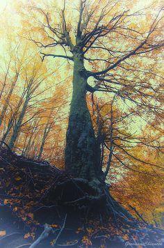 Title:  Autumn  Artist:  Giovanni Chianese