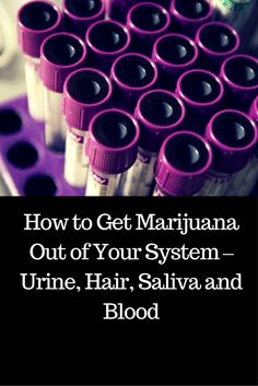 @proulxjustice  How to Get Marijuana Out of Your System – Urine, Hair, Saliva and Blood