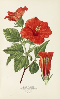 Favourite Flowers of Garden and Greenhouse. 4 Bde. 1896