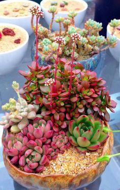 Succulent Wall, Succulent Gardening, Succulent Arrangements, Succulent Terrarium, Succulents In Containers, Cacti And Succulents, Planting Succulents, Planting Flowers, Cactus Planta